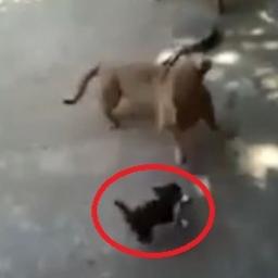 Pies podszedł do małego kotka, wtedy matka malucha zrobiła coś niespodziewanego
