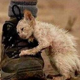 Znalazła kotka który był w fatalnym stanie, gdy mu pomogła stało się coś co złam