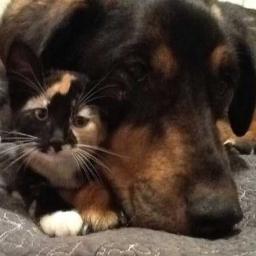 Gdy zobaczysz jak bardzo ta kotka tęskni za swoim przyjacielem wzruszysz się do