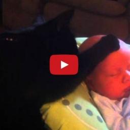 Gdy dziecko się rozpłakało nie mogąc spać ten kotek zrobił coś świetnego