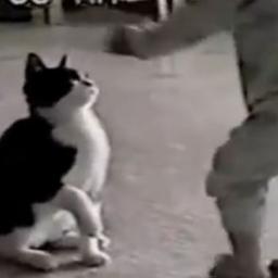 Kot postanowił zaatakować chłopczyka, to co stało się potem jest przesłodkie!