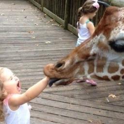 Oglądając co wyprawiają te zwierzaki trudno się powstrzymać od śmiechu
