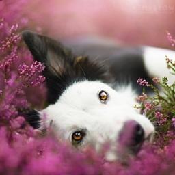 Jej pasją jest fotografowanie psów. Efekt? Powalający!