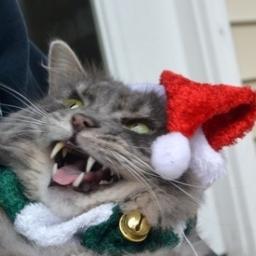 Zwierzęta które chyba nie lubią świąt. Numer 7 jest świetny!