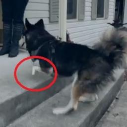 Adoptowała niepełnosprawnego psa, wtedy jej koledzy z pracy postanowili zrobić c
