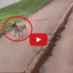 Ratownicy zabrali mężczyznę do karetki, wtedy jego pies zrobił coś czego się nie