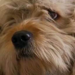 Za darmo ostrzygli bezdomnego psa, to co odkryli jest wzruszające