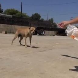 Gdy przyjechali uratować bezdomne psy okzało się to trudniejsze niż myśleli