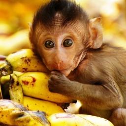 Jedna z małp w klatce została pobita przez pozostałe małpy. Gdy zrozumiesz dlacz
