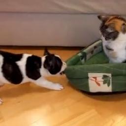 Szczeniak chciał się położyć, jednak kot zajął jego miejsce, to co stało się pot