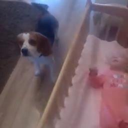 Położyli córeczkę w kołysce, nie spodziewali się co zrobi ich pies