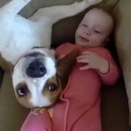 Nie spodziewasz się co ten pies wyprawia z tą dziewczynką...