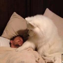 Najsubtelniejszy pies świata :)
