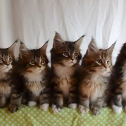 To nie są zwyczajne kotki! Tego, co robią one, nie zrobi żadny inny kot.