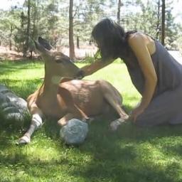 Co się stanie, gdy zbliżysz się do potrzebującego pomocy, dzikiego zwierzęcia?