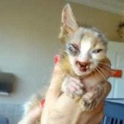 Była wyniszczona przez choroby a miała zaledwie kilka tygodni. Zobacz jak się zm
