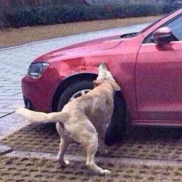 Kierowca całkiem świadomie potrąca psa. Zobacz, co się wydarzyło potem! Jednak s