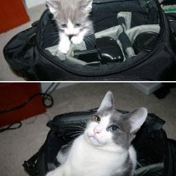 Dla fanów kotów - 15 absolutnie uroczych zdjęć kotów kiedyś i teraz.