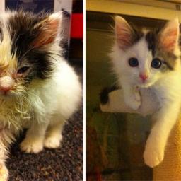 Dobro jest piękne - wystarczy zobaczyć zdjęcia tych kotów po tym, jak ktoś się o