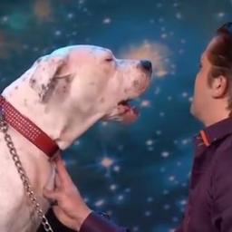 W belgijskim Mam Talent pojawił się ten pies. Zobacz jaki ma talent!