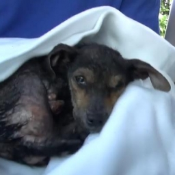 Przemoczony pies prawie umarł w kanałach, jednak obejrzyj koniecznie do końca