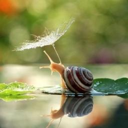 Oglądając te zdjęcia, zachwycisz się pięknem ślimaków i ich światem jak z bajki!