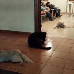 Kobieta całe życie pomagała bezdomnym psom, to co zrobiły w dniu jej pogrzebu je