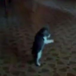 Gdy zobaczyłem z kim walczy ten kociak mało nie spadłem z krzesła... Ze śmiechu