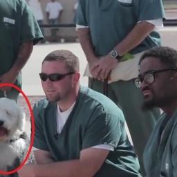 Ze schroniska do więzienia... Zobacz, dlaczego psy trafiają za kraty.