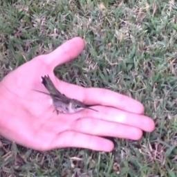 Zdziwiłam się, że koliber został uwięziony przez coś takiego! Jak to dobrze, że