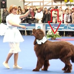Gdy treserka podniosła rękę, pies zrobił coś niesamowitego!