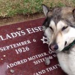 Wzieli psa na grób jego pani, to co zrobił sprawiło że wszyscy się popłakali