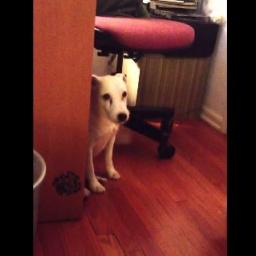 Już miała go ukarać za jego wybryk, gdy nagle pies zrobił coś niespodziewanego..