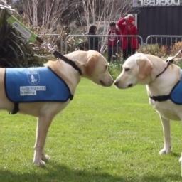 Te psy nie widziały się odkąd były szczeniaczkami. Gdy doszło do spotkania, nie