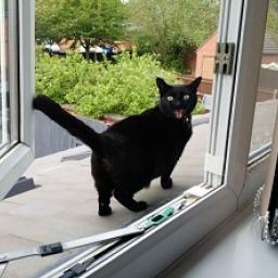 Wszyscy właściciele kotów powinni zobaczyć, dlaczego warto wypuszczać swoje zwie