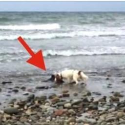 Mężczyzna usłyszał szczekanie swojego psa, a gdy się zbliżył do niego, nie mógł