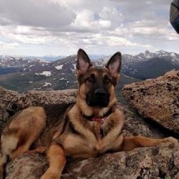 Zabrali psa na wycieczkę w góry. Nikt nawet nie przypuszczał, że to ich ostatnie