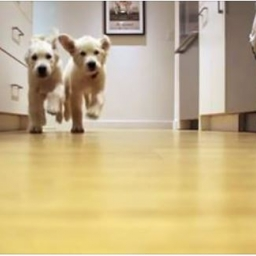 Nagrywali swoje psy od 11 tygodnia do 11 miesiąca życia. Zmienia się wszystko, p