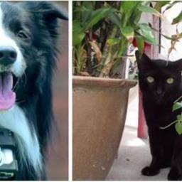 Zawiesili psu aparat fotograficzny wyposażony w specjalny czujnik. Dzięki temu p