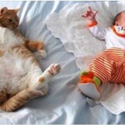 Czy jest coś, w czym jesteśmy lepsi od kotów? Ich zdaniem nie... Zobaczcie galer