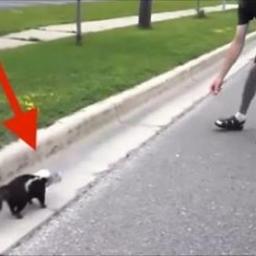 Ten skunks wygląda jakoś dziwnie... Gdy chłopak zbliżył się, by mu pomóc, nie wi