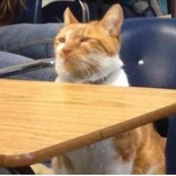 Ten kot pełni wyjątkową funkcję w pewnej szkole... To, jak się tam zaaklimatyzow