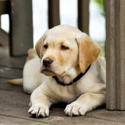 Rolnik chciał przekonać chłopca by nie kupował niepełnosprawnego psa, to co usły