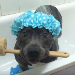 Zachowanie tego psa jest niesamowite! Szkoda, że mój nie potrafi tak reagować na