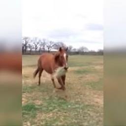 Powód, dla którego ten koń biegnie z sianem w pysku, jest genialny!