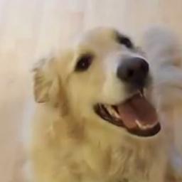 W domu pełno było rozrzuconych zabawek, wtedy ten pies zrobił coś niecodziennego
