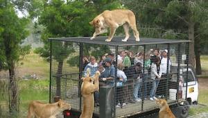 Tak powinno wyglądać każde zoo