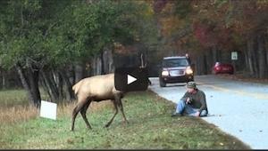Ten jeleń zaczął atakować fotografa. To co się zdarzyło potem jest niesamowite