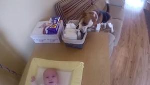 Mama zmieniała maluchowi pieluchę, gdy nagle ten pies zrobił coś nieprawdopodobn