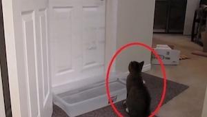 Właściciel zamknął drzwi żeby ten kot nie wyszedł. Zobacz co na to sprytny zwier